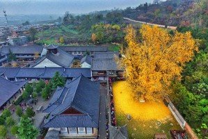 Жёлтый океан во дворе буддистского храма
