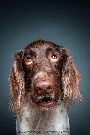 Портреты собак передают личность животных