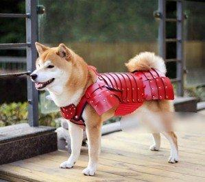 Японская компания выпустила доспехи самурая для кошек и собак