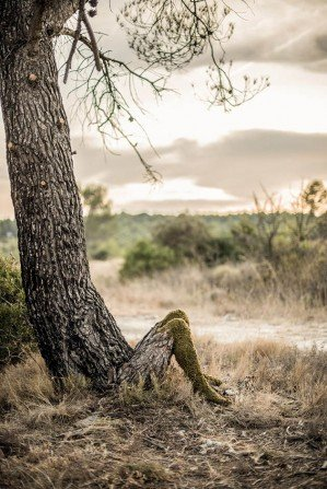 5 откровений Природы в арт-инсталляции Human Nature