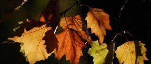 В воздухе осень