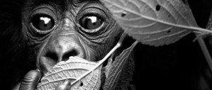 Фотографии дикой природы Дэвида Ярроу