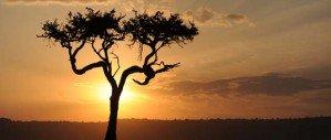 Фотосафари в Африке