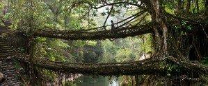 Потрясающие мосты из корней в Индии