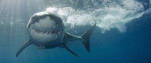 Конкурс подводной фотографии 2014