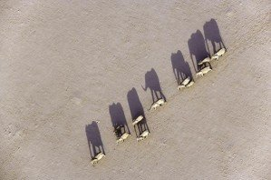 Африка с высоты птичьего полета Михаэля Полиса