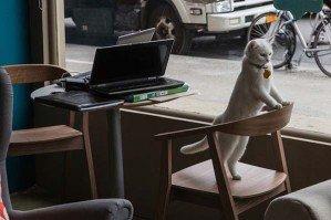 Первое кафе для кошек открылось в Нью-Йорке