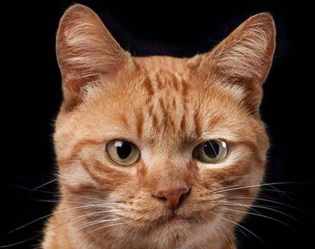Потрясающие портреты кошек Роба Бехоу