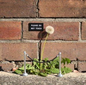 Уличные заметки для прохожих Майкла Петерсона