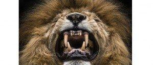 Неизвестные львы