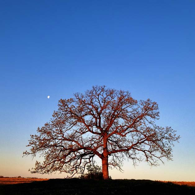 An iPhone Photo Journal documenting A Year in the Life of That Tree