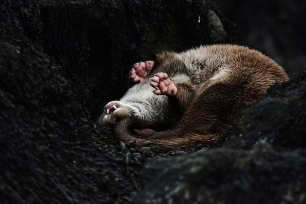 The British Wildlife Photography Awards
