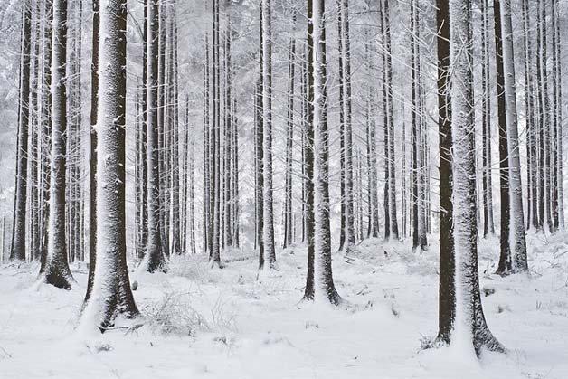 Landscapes_Winter__2708276k
