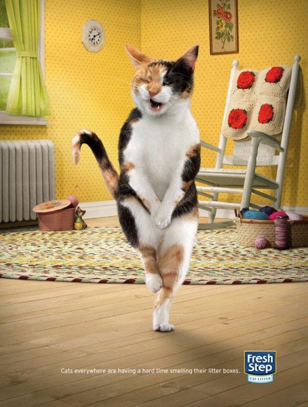 freshcat3