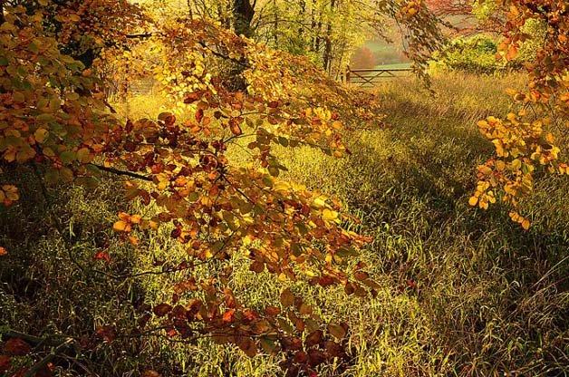 landscape-autumn_2707674k