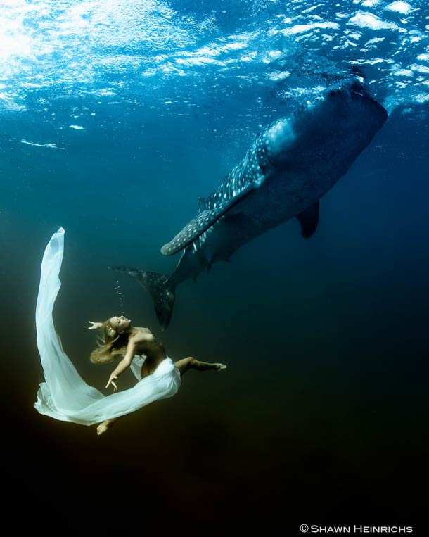 Shawn-Heinrichs-photography-underwater-9