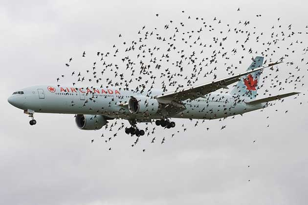 Airteam__Birds_777_2746421k