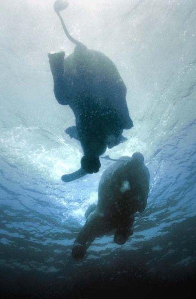 Плавающие слоны