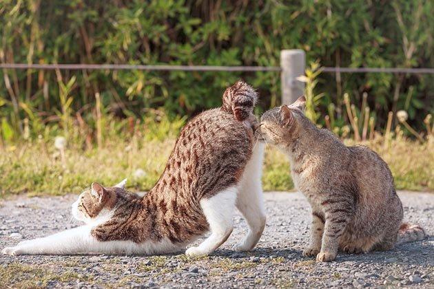 cat-portraits-seiji-mamiya-11