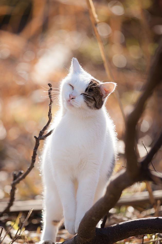 cat-portraits-seiji-mamiya-3