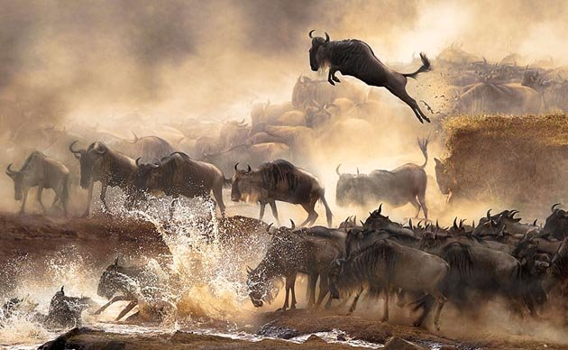 sony-world-photography-awards-2014-winners-43
