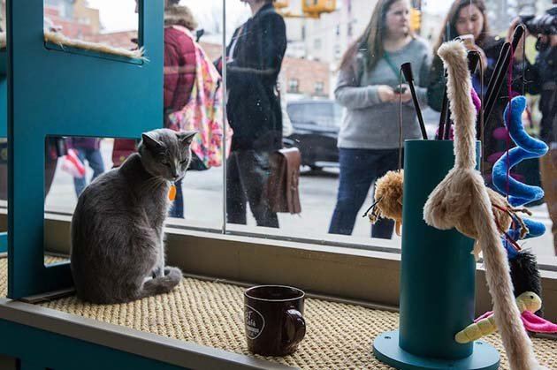 catcafe10