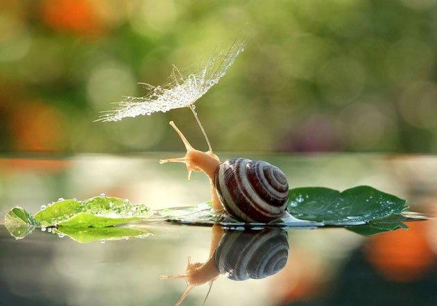 macro-photography-snails-vyacheslav-mishchenko-10