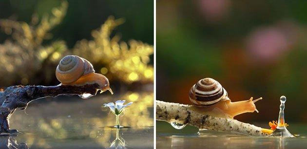macro-photography-snails-vyacheslav-mishchenko-12