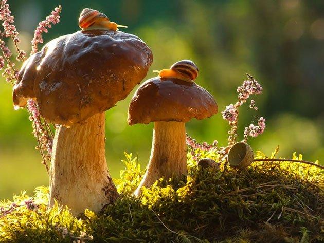 macro-photography-snails-vyacheslav-mishchenko-3