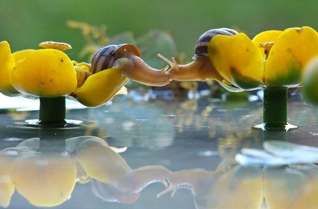macro-photography-snails-vyacheslav-mishchenko-9