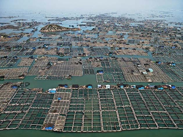 Marine aquaculture, Luoyuan bay, Fujian province, China, 2012