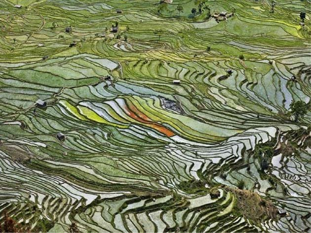 Rice terraces in western Yunnan province, China, 2012