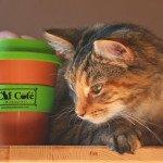 cat-cafe08