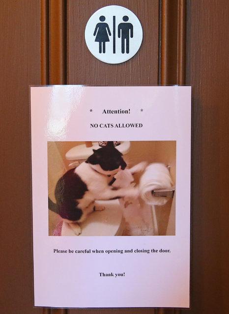 Кошки хозяева в этом кафе.