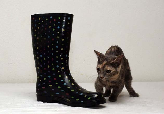 short_cat07