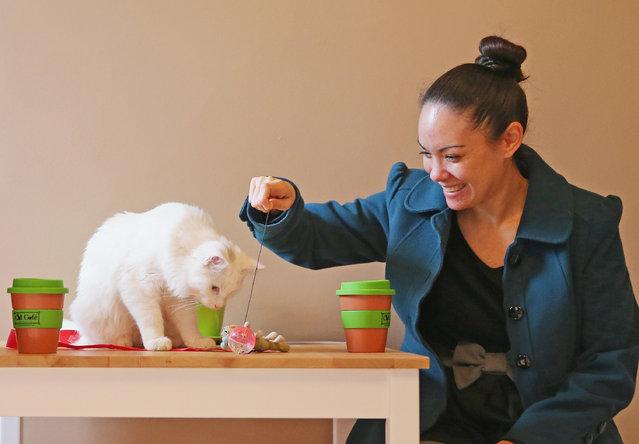 cat-cafe01