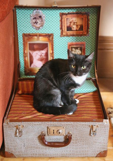 Лекси около 15 лет. Она очень ласковая и любит наблюдать за другими кошками.