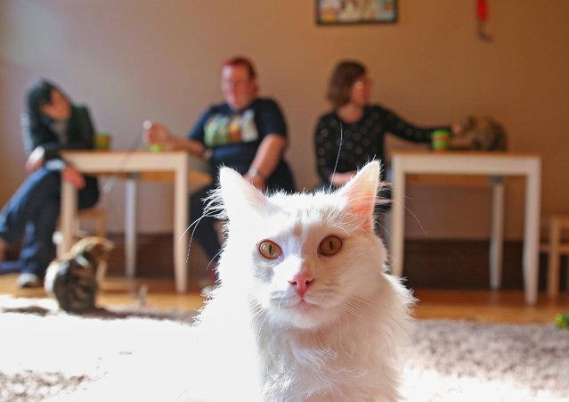cat-cafe04
