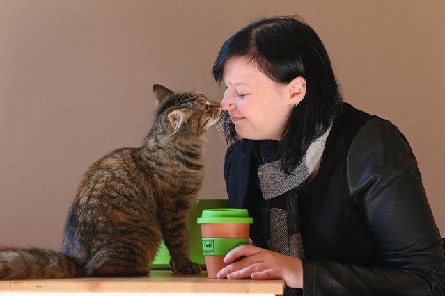 cat-cafe07