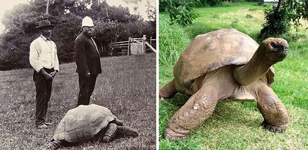 Джонатан - самая старая черепаха в мире
