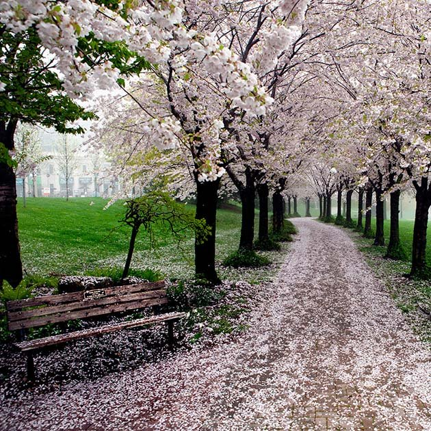 amazing-path-before-you-die07