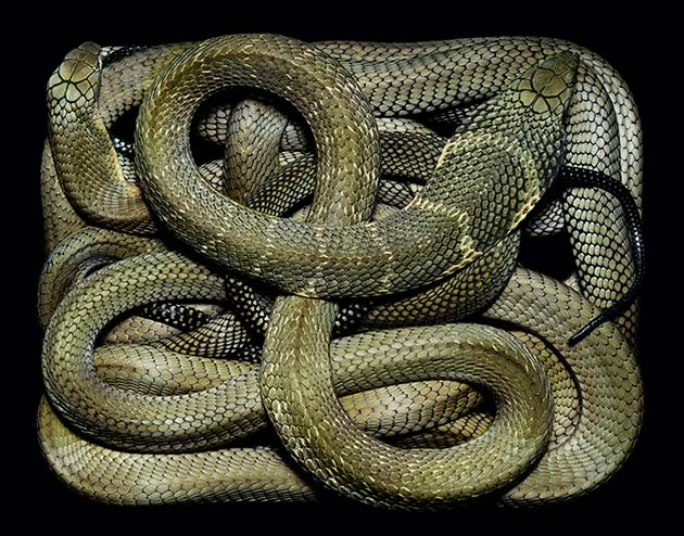 snakes07