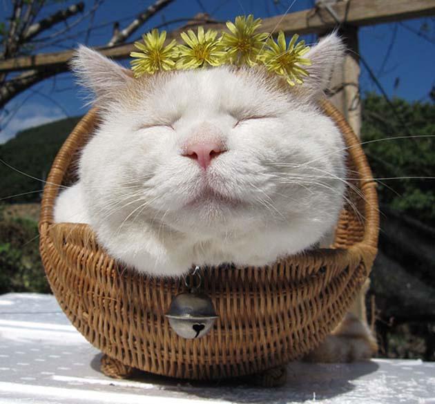 shironeko-happy-cat-63__605