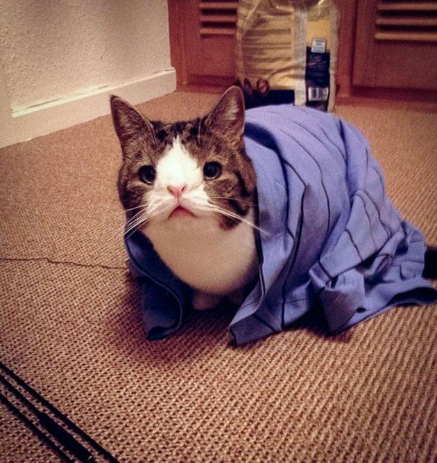 most-popular-cats-monty-1__605