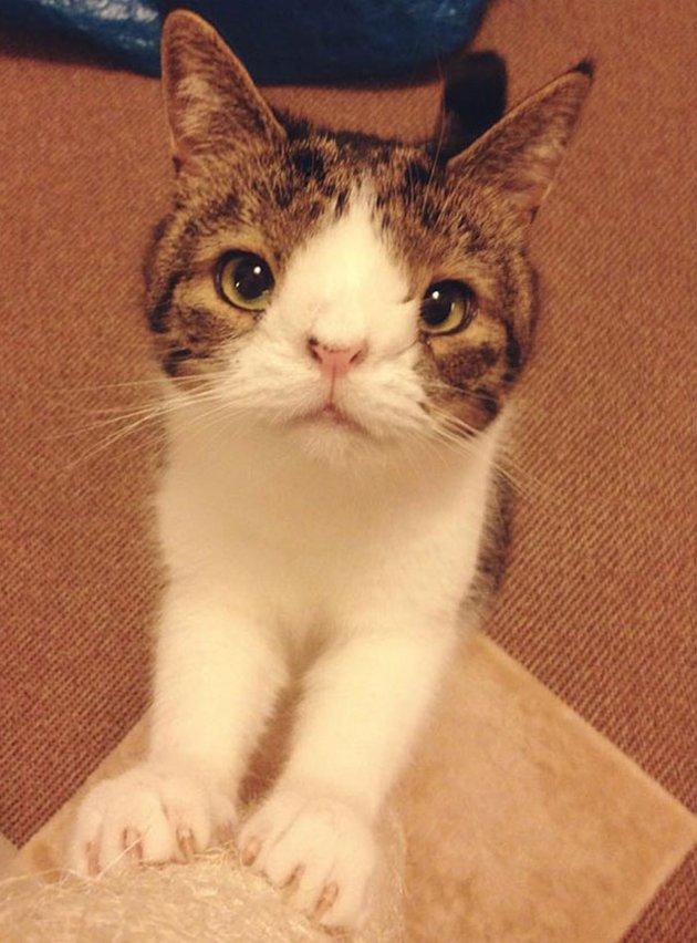 most-popular-cats-monty-2