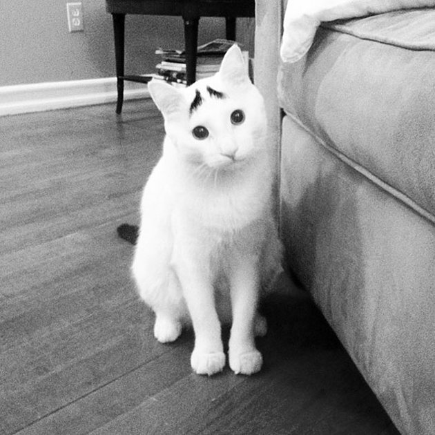 most-popular-cats-sam-has-eyebrows-2