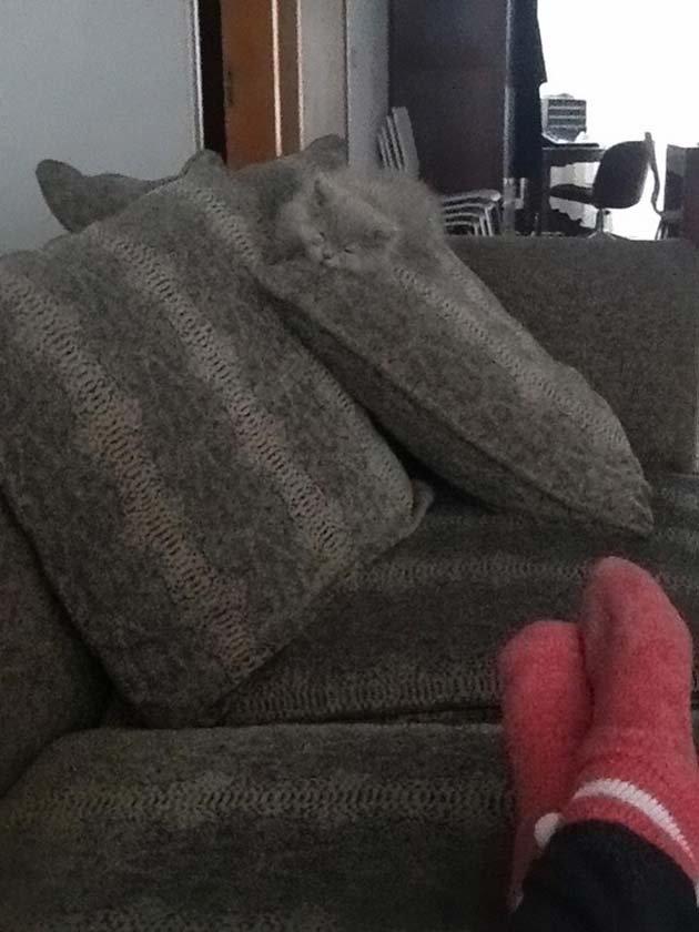 ninja-cats-2-10__605