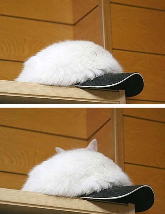 ninja-cats-2-1__605