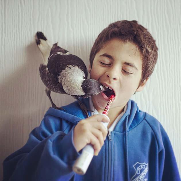 Пингвин любит зубную пасту и принимает активное участие в чистке зубов