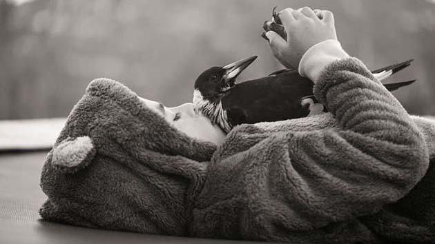 penguin-magpie-rescue-friendship-bloom-family-australia-17